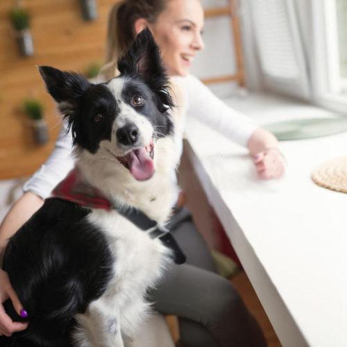 Comportamento del cane e del gatto