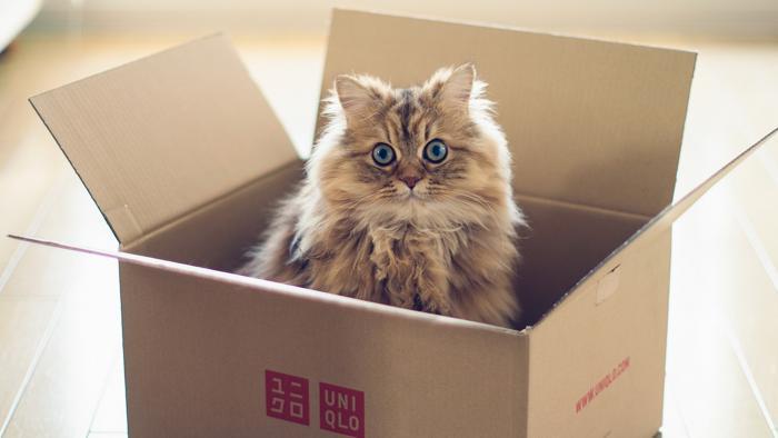 Benessere del gatto