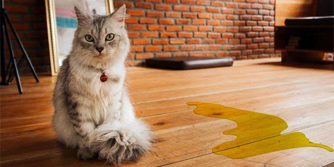 Eliminazione inappropriata del gatto